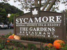sycamore6